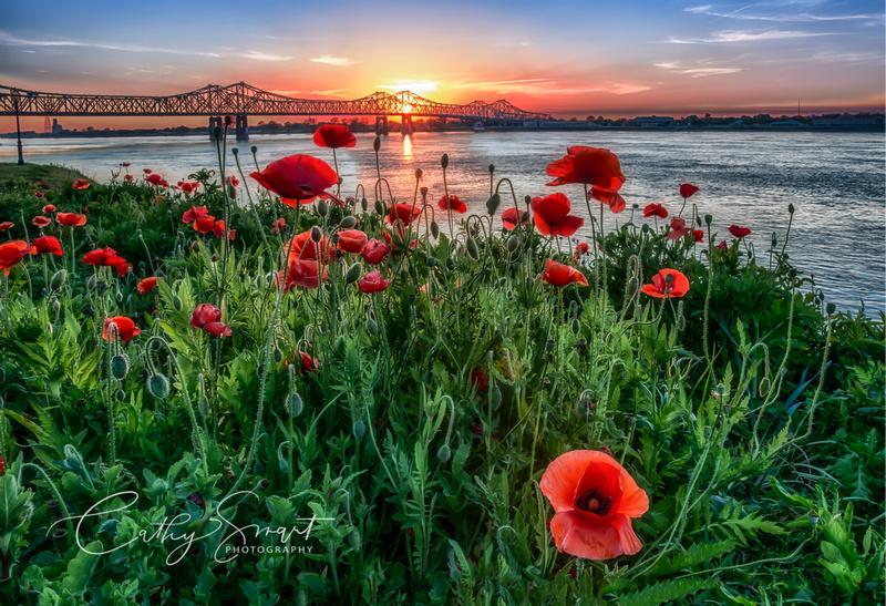 Poppies at Sunset, Natchez, Mississippi