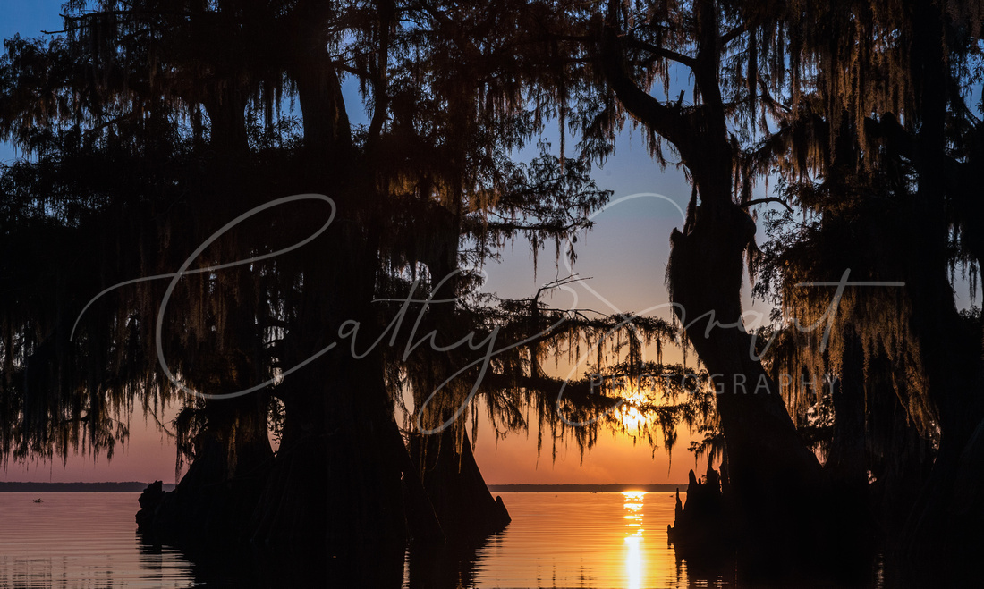 Louisiana Moonrise