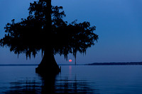 June - Lake Fausse, Louisiana Moonrise