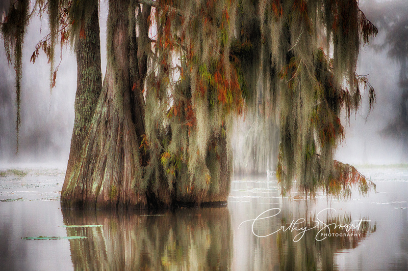 Colors of the Swamp