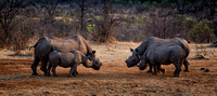 Four Black Rhinos