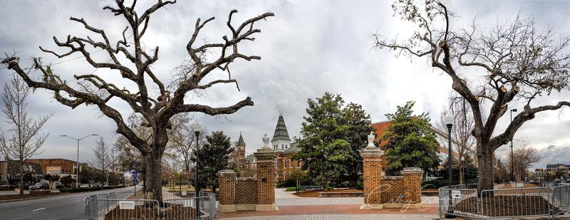 Auburn Trees